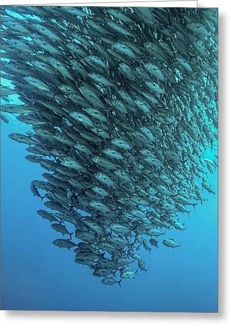 Schooling Jackfishes Greeting Card by Henry Jager