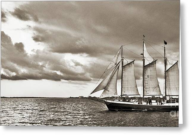 Tall Ships Greeting Cards - Schooner Pride Tallship Charleston SC Greeting Card by Dustin K Ryan
