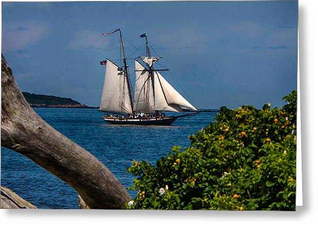 Maine Lighthouses Greeting Cards - Schooner sailing out of the harbor Greeting Card by Jeff Folger