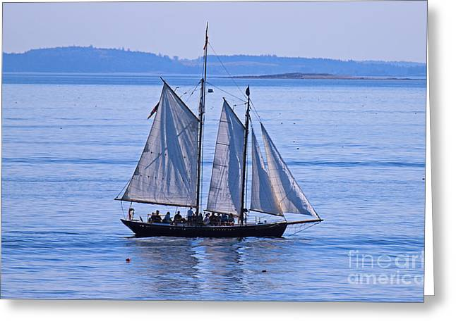 Surprise Greeting Cards - Schooner Surprise Greeting Card by Jim Beckwith