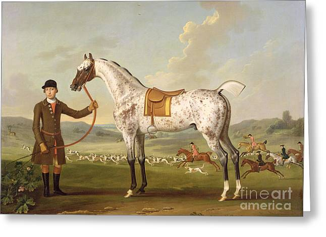 The Horse Greeting Cards - Scipio - Colonel Roches Spotted Hunter Greeting Card by Thomas Spencer