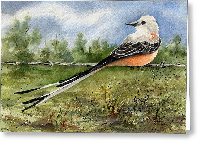 Scissor-tail Flycatcher Greeting Card by Sam Sidders