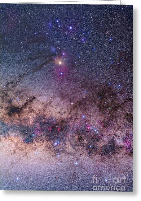 Scorpius With Parts Of Lupus And Ara Greeting Card by Alan Dyer