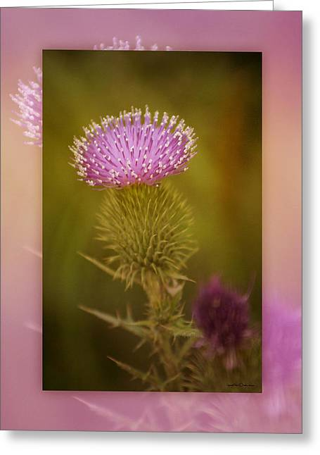 Scotch Thistle Greeting Card by Holly Kempe