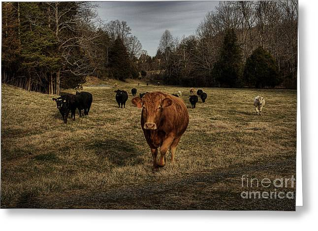 Scotopic Vision 9 - Cows Come Home Greeting Card by Pete Hellmann