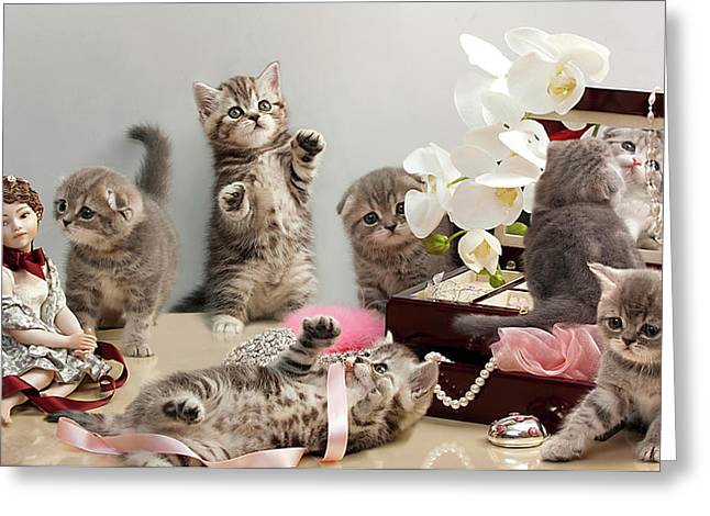 Clever Greeting Cards - Scottish Fold cats Greeting Card by Evgeniy Lankin
