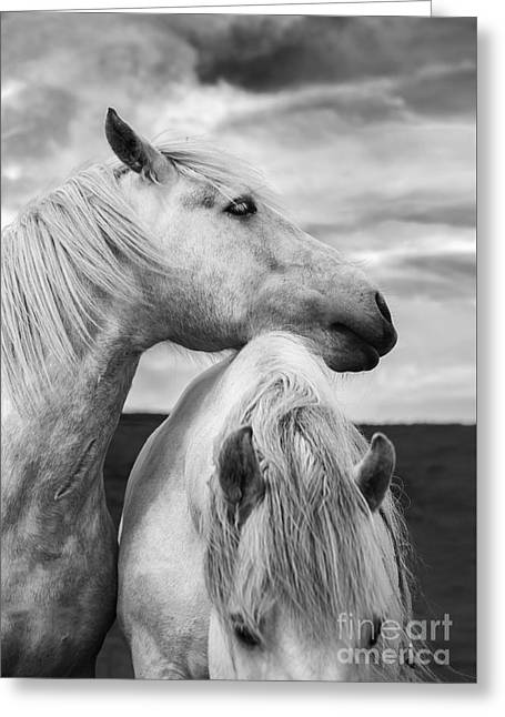 Scottish Horses Greeting Card by Diane Diederich