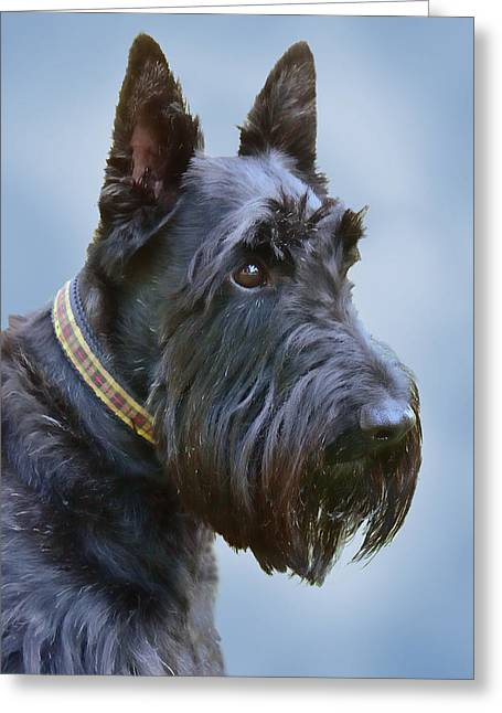 Dog Photographs Greeting Cards - Scottish Terrier Dog Greeting Card by Jennie Marie Schell