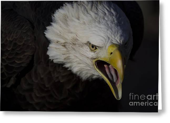 Andrea Silies Greeting Cards - Screaming Eagle Greeting Card by Andrea Silies