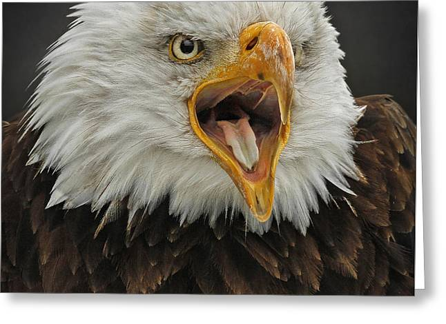 Screaming Eagle Greeting Card by Sherry Butts