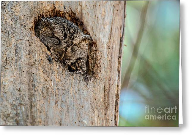 Morph Greeting Cards - Screech Owl in a Tree Greeting Card by Cheryl Baxter