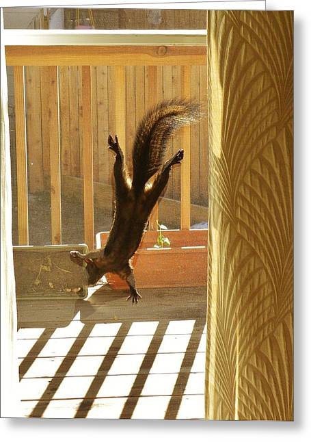 Fox Squirrel Greeting Cards - Screen Dance Squirrel Greeting Card by CL Redding