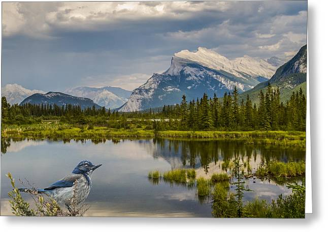Mountain Valley Greeting Cards - Scrub Jay in the Mountains Greeting Card by Patti Deters