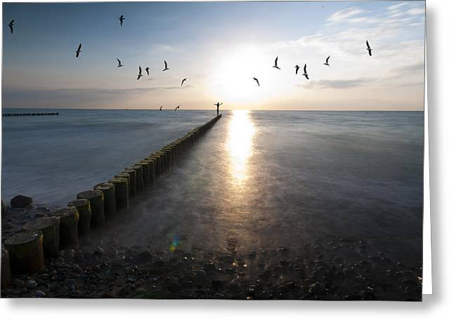 Sea Birds Sunset. Greeting Card by Nathan Wright