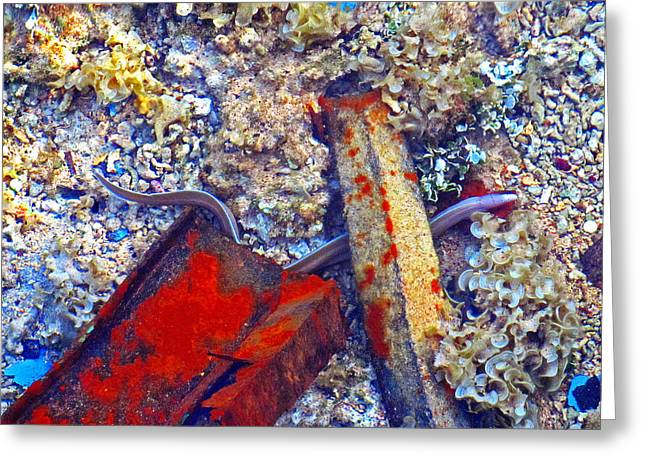Puffer Digital Art Greeting Cards - Sea. Corals. Rusty Iron And Little Moray.  Greeting Card by Andy Za