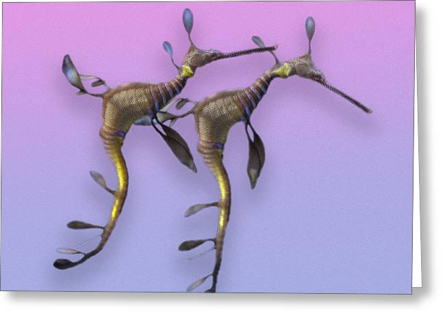 Nature Study Greeting Cards - Sea Dragons Greeting Card by Betsy C  Knapp