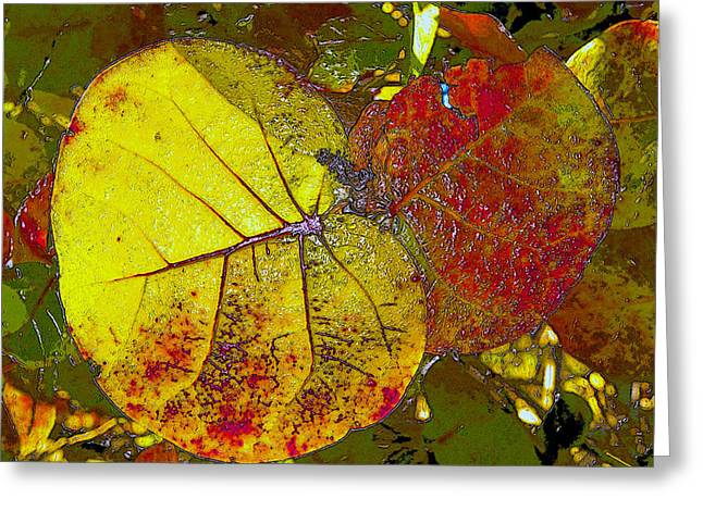Grape Leaves Digital Greeting Cards - Sea Grape Leafs Greeting Card by David Lee Thompson