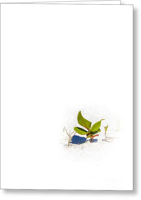 White Sand Greeting Cards - Sea Grape Greeting Card by Marvin Spates