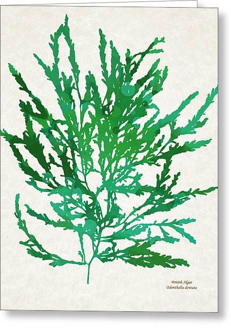 Sea Green Seaweed Art Odonthalia Dentata Greeting Card by Christina Rollo
