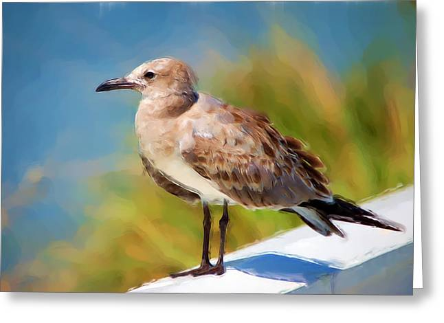Sea Gull of Boca Grande Greeting Card by Rich Leighton
