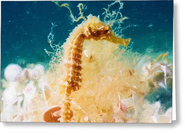 Aquatic Greeting Cards - Sea Horse  Greeting Card by Roy Pedersen