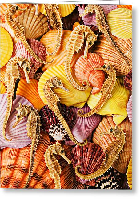 Sea Life Photographs Greeting Cards - Sea horses and sea shells Greeting Card by Garry Gay