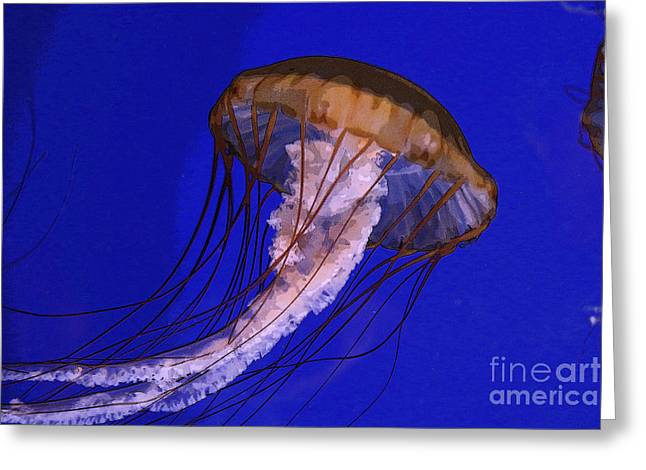 Sea Jelly Greeting Card by Jeanette French