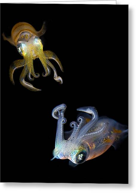 Squid Greeting Cards - Sea Jewels Greeting Card by Andrey Narchuk