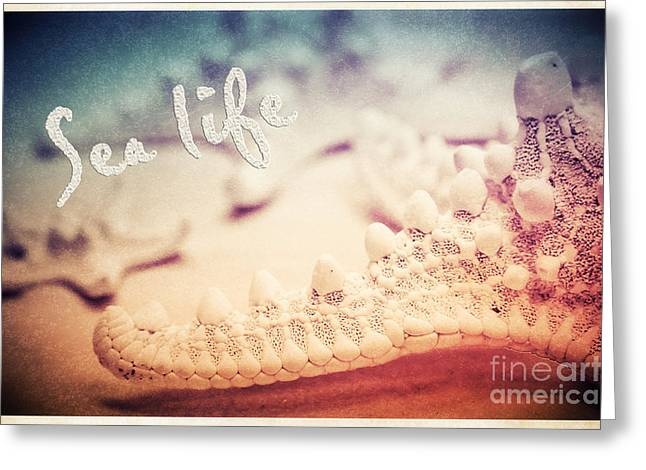 Sea Life Mixed Media Greeting Cards - Sea life Greeting Card by Angela Doelling AD DESIGN Photo and PhotoArt
