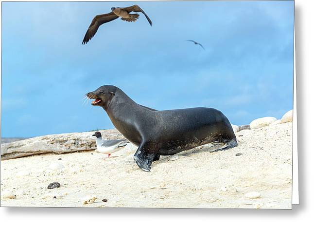 Brown Booby Greeting Cards - Sea Lion and Birds Greeting Card by Jess Kraft