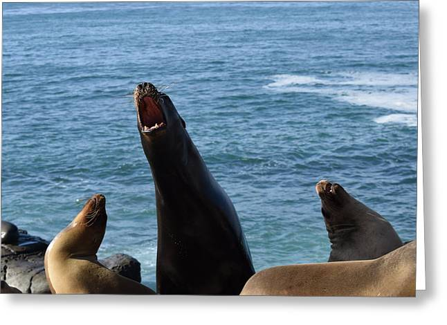 California Sea Lions Greeting Cards - Sea Lion Roars Greeting Card by Steve Scheunemann