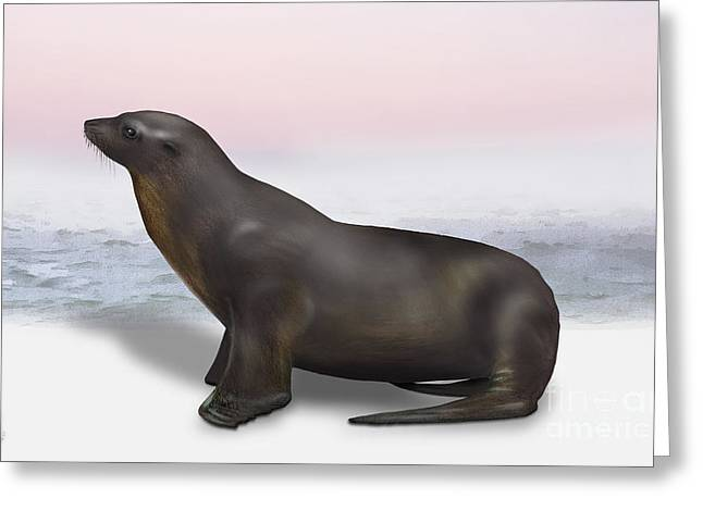 Sea Lions Drawings Greeting Cards - Sea Lion Zalophus californianus - Marine Mammal - Seeloewe Greeting Card by Urft Valley Art
