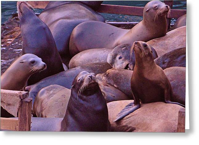 Sea Lions Greeting Cards - Sea Lions at the Wharf Greeting Card by Ellen Berrahmoun