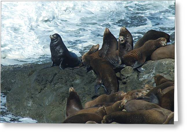 Lions Greeting Cards - Sea Lions Greeting Card by Lawrence Pratt