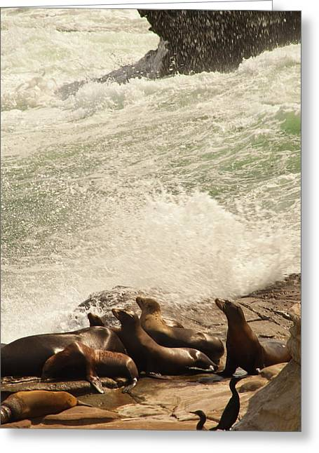 California Sea Lions Greeting Cards - Sea Lions n Cormorants Greeting Card by Daniel Hebard