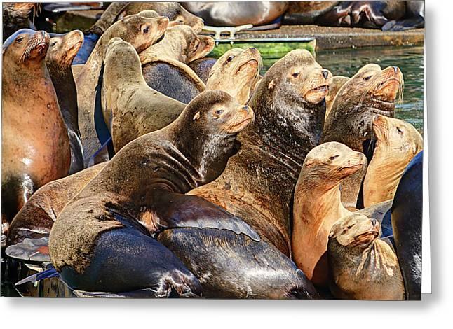 Sea Lions On Dock Greeting Card by Marv Vandehey