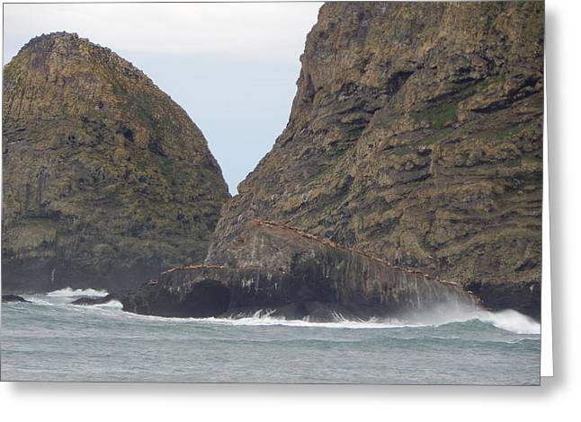 Lions Greeting Cards - Sea Lions On Giant Rock Greeting Card by Gallery Of Hope