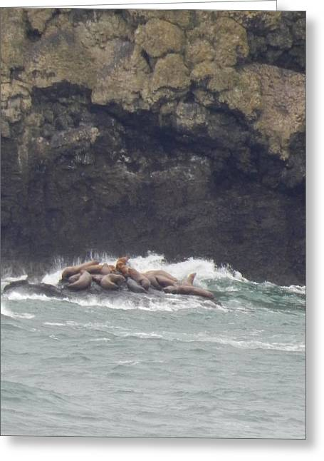 Lions Greeting Cards - Sea Lions On Rock Greeting Card by Gallery Of Hope