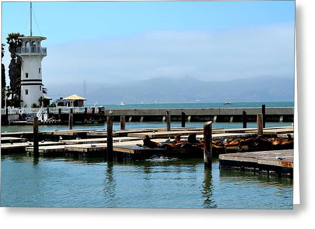 Sea Lions Greeting Cards - Sea Lions on the Pier Greeting Card by Regina Strehl