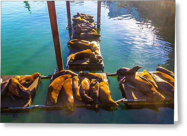 Sea Lions Sunning On Dock Greeting Card by Garry Gay