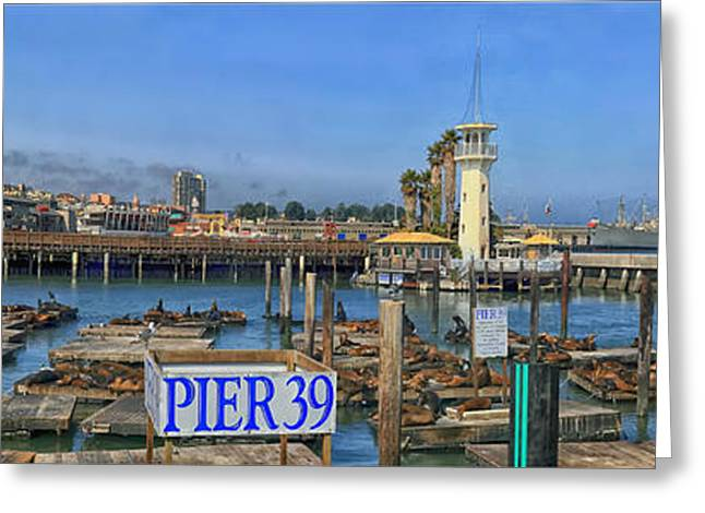 Lions Greeting Cards - Sea Lions Sunning on Pier 39 - San Francisco Greeting Card by Skeeze