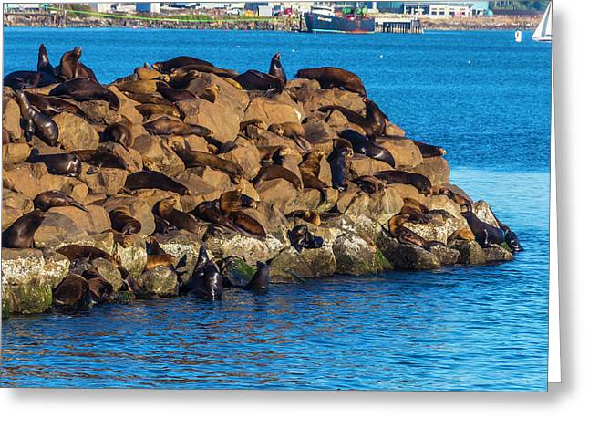 Sea Lions Sunning On Rocks Greeting Card by Garry Gay