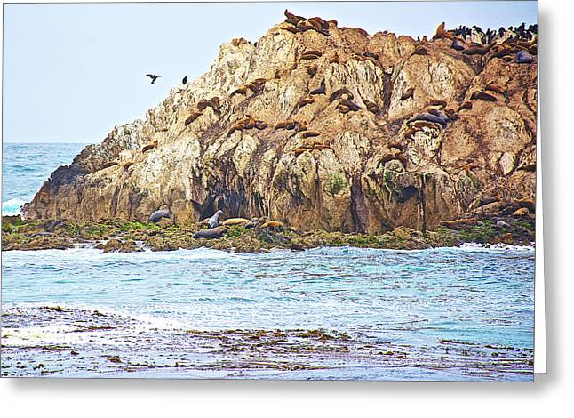 Sea Lions Greeting Cards - Sea Mammal and Bird Resort along Pacific Coast near 17 Mile Drive to Pebble Beach-California  Greeting Card by Ruth Hager