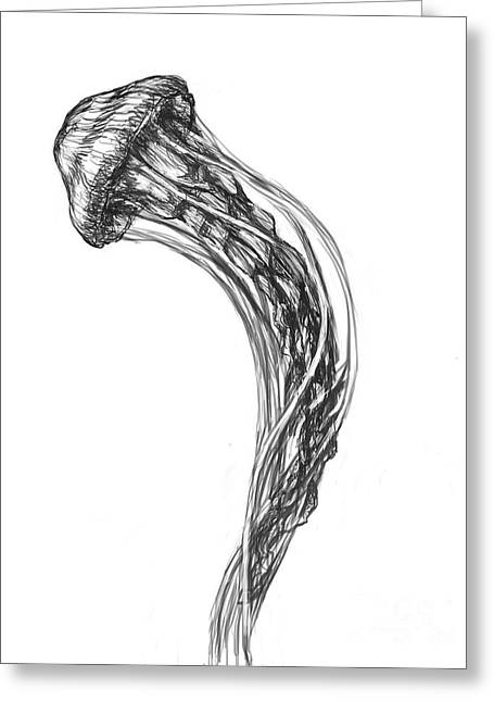Jelly Fish Greeting Cards - Sea Nettle Jellyfish Greeting Card by Spencer Sutton