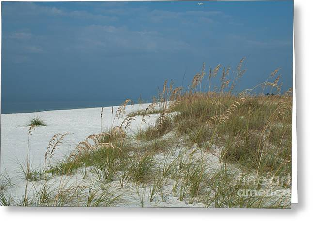 Beach Photos Greeting Cards - Sea Oats at Mexico Beach Florida Greeting Card by Lowell Anderson