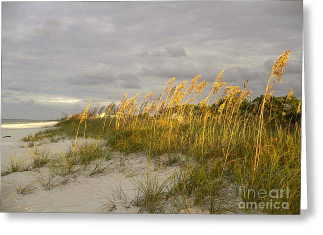 Beach Photos Greeting Cards - Sea Oats at Sunrise Greeting Card by Lowell Anderson