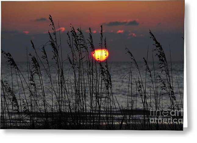 Sea oats Greeting Card by David Lee Thompson