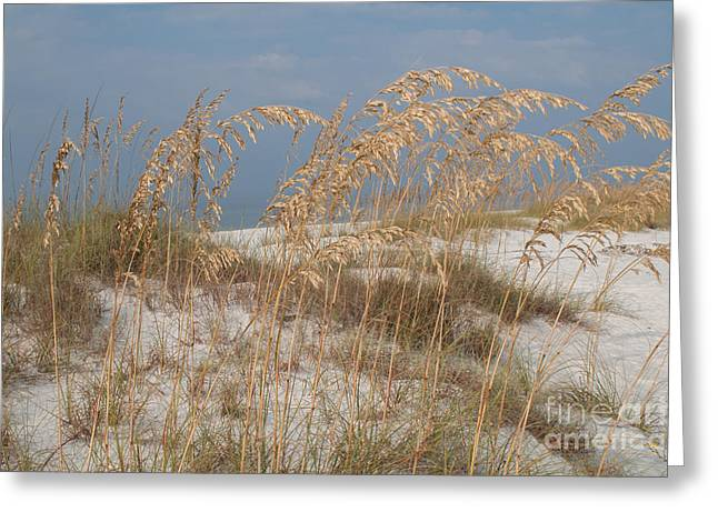Beach Photos Greeting Cards - Sea Oats Greeting Card by Lowell Anderson