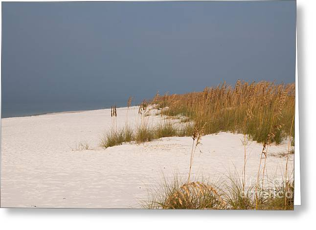Beach Photos Greeting Cards - Sea Oats on the Beach Greeting Card by Lowell Anderson
