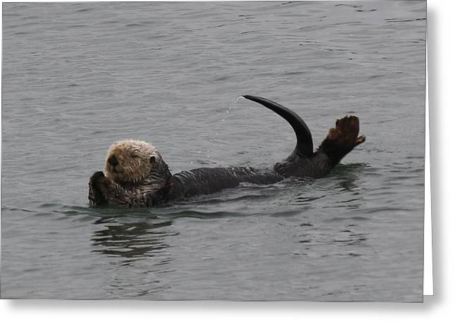 Sea Animals Greeting Cards - Sea Otter - 2 Greeting Card by Christy Pooschke